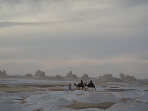 WITTE WOESTIJN kameeltocht